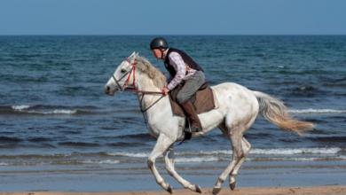 Photo of 78-åringen som rider sin galopphäst varje dag