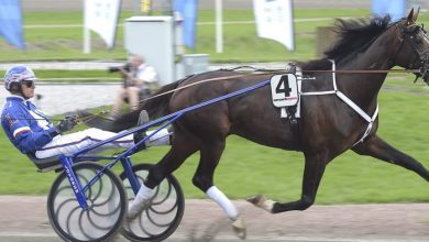 Photo of Jägersrohäst klar för Elitloppet